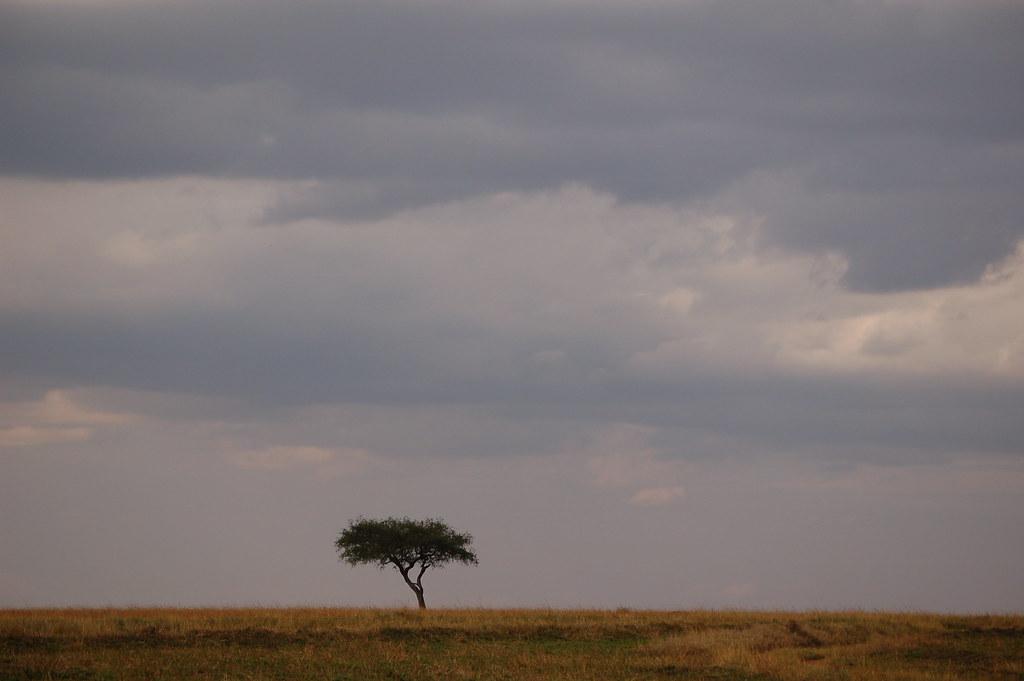 Maasai Mara National Reserve, Kenya   en.wikipedia.org ...