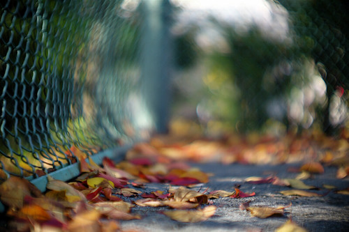 Fallen Leaves Flickr Photo Sharing