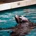 Faith Middleton @ Mystic Aquarium