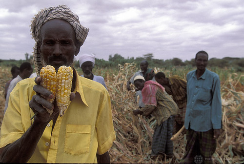 Man shows harvested corn | by World Bank Photo Collection