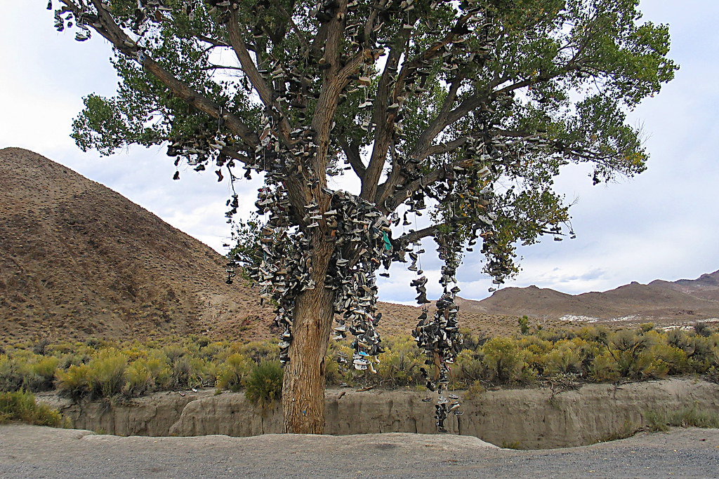 Tree Shoes Nevada Shoe Tree in Nevada | by