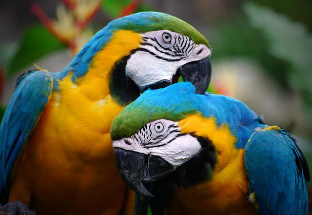 Image result for parrots