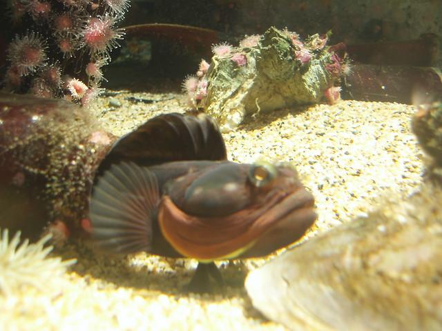 Weird Looking Fish | F...