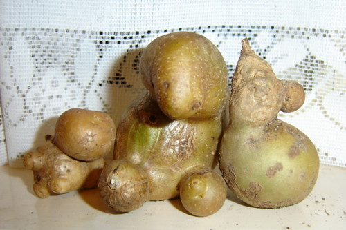 Potato Family; mutant spuds | by DrSlippers2007