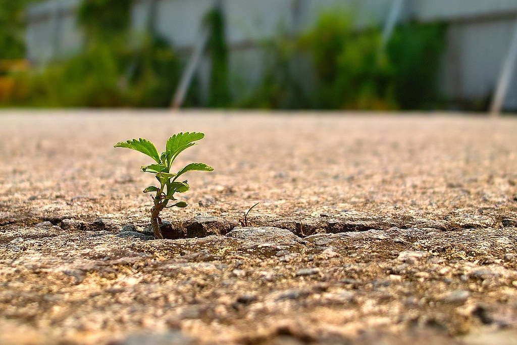 Tiny Little Plant Grows At The Crack Of The Concrete Slab