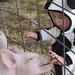 Blake & The Pig