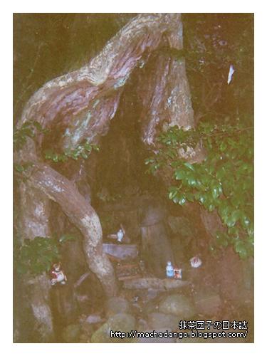 [06.11.25] 路上經過一棵形狀怪異的樹