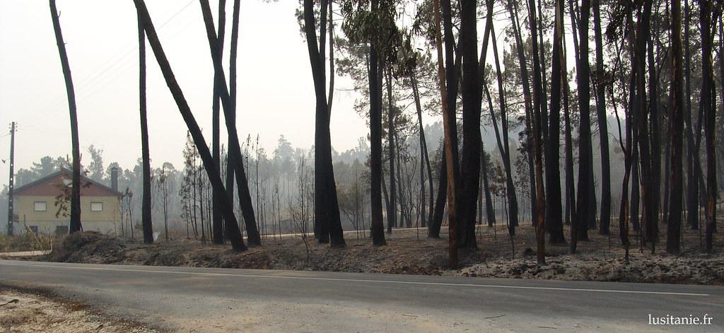 On voit par les arbres calcinés que les incendies ont eu lieu à quelques mètres des habitations...