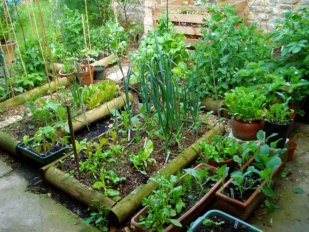 7 Edible Landscape Design Ideas to Make the Most Out of Your Garden