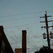 chimney swifts 2: wider view