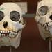 Galeries de Paléontologie et Anatomie comparée