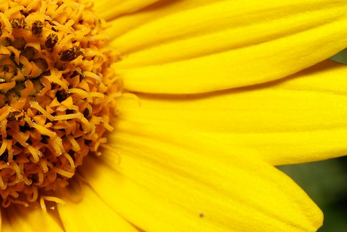 Bright as Yellow | by figment_