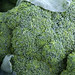 Green Market Broccoli