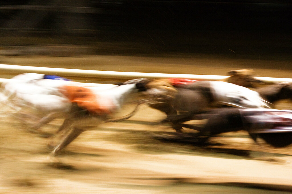 Previewing the Essex Vase greyhound racing extravaganza