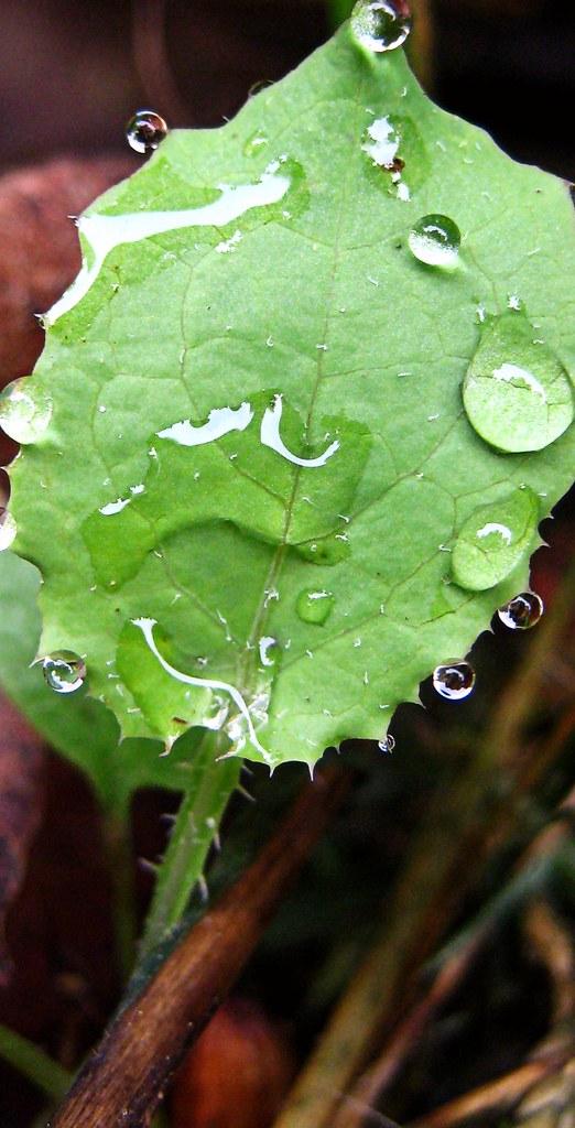 Nature S Green Magic Waterless Car Wash Wax Reviews