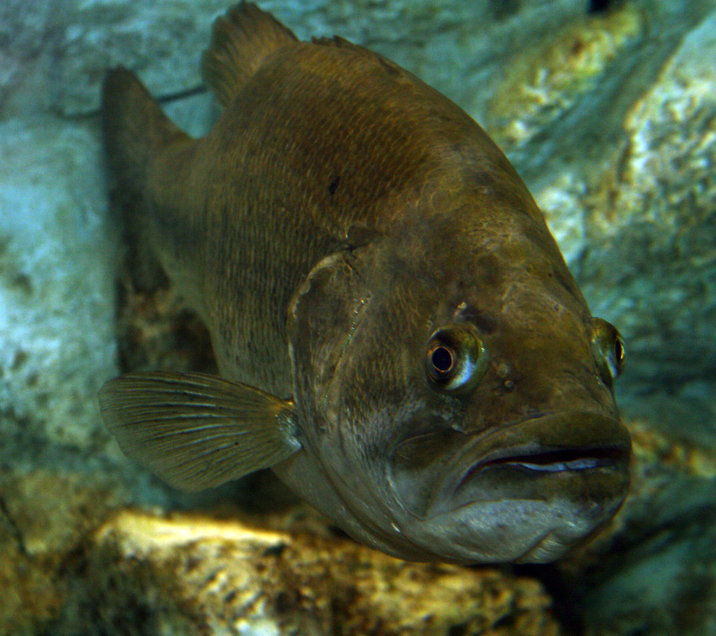2008 07 25 Athens Tx Freshwater Fish Hatchery 2989