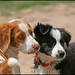 Puppies - BFF
