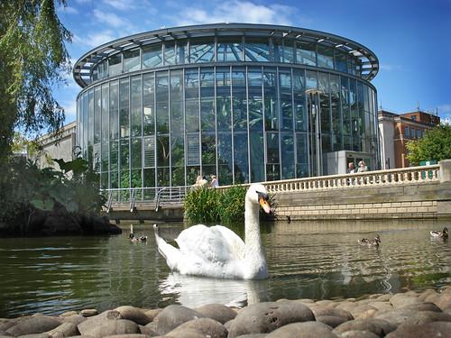 Mowbray park pond swan and winter gardens sunderland by for Winter garden pool