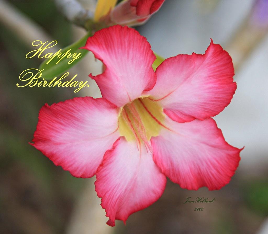 Happy Birthday Darlene | July 6, 2008 is the birthday of ...