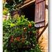 (488) La Roque- Gageac / balcony
