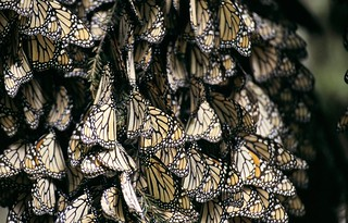 Rabble of butterflies | by World Bank Photo Collection