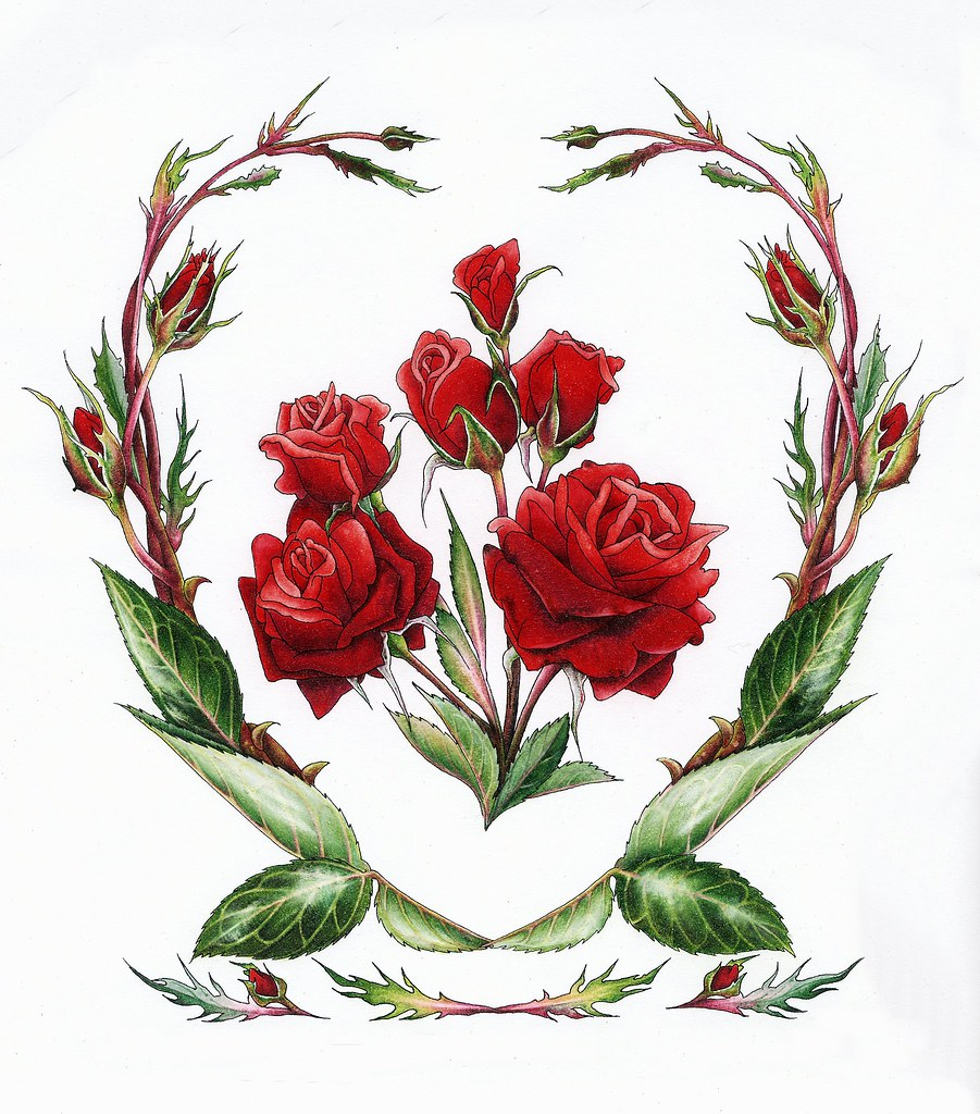rose june flower of the month red roses by myrea pettit