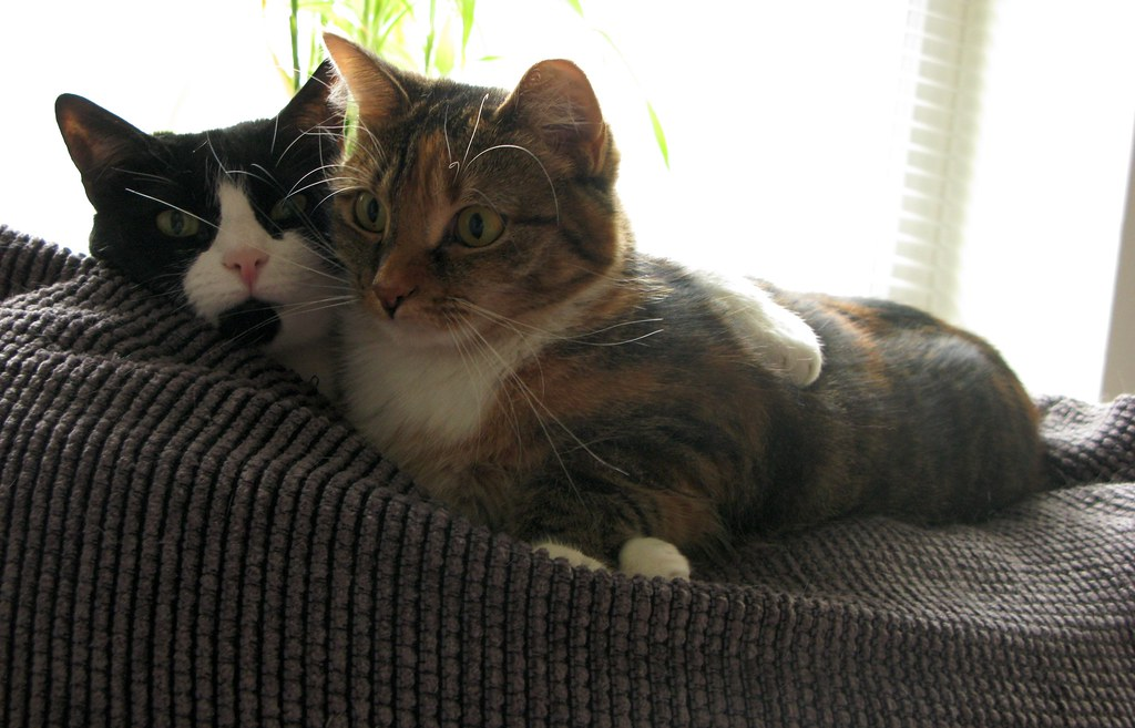 Cuddling Cats Pictures
