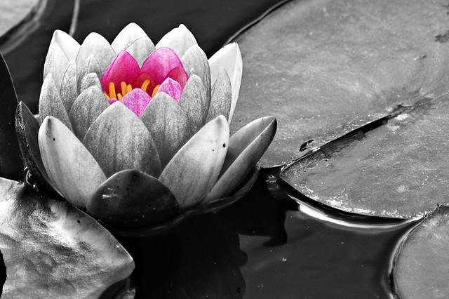 Dans nos coeurs sommeil un tr sor flickr photo for Dans nos coeurs cantal
