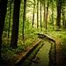 Mattheis Forest
