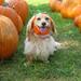 A happy pumpkin