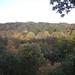 fall_trees_10