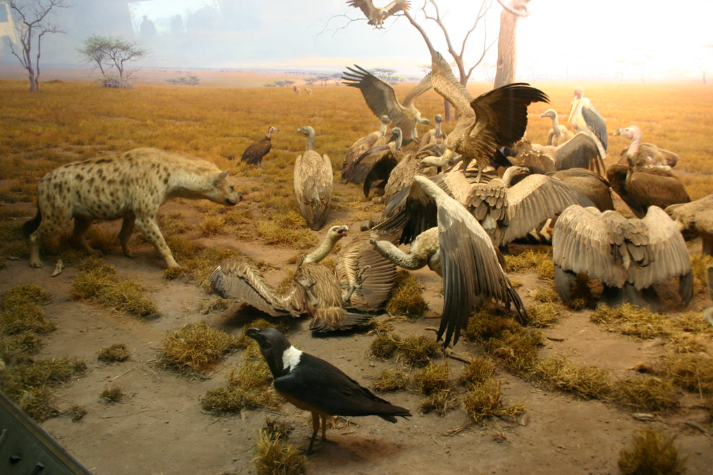 Environment of the Hyena Jackal Vulture Group | Visit my ...