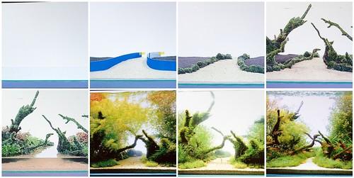 Amano Aquascape Progression | Flickr - Photo Sharing!