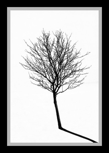 High Contrast Tree In Snow (2800+ Views) | by Cordin4