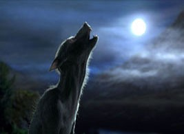harry potter werewolf at full moon this is a werewolf