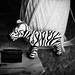 [zebra baby]