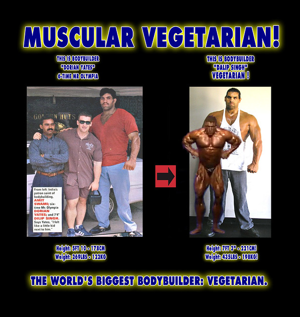 Image Result For Muscle Building Protein