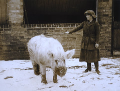 Some Pig | by The National Archives UK