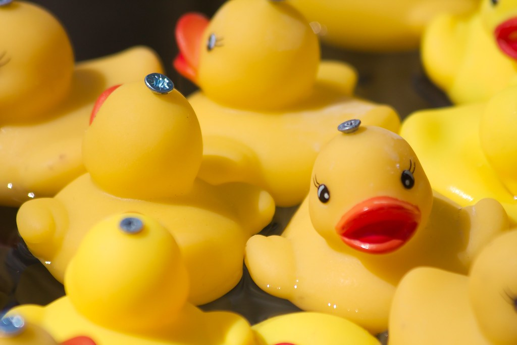 not all it 39 s quacked up to be plastic ducks in a tub. Black Bedroom Furniture Sets. Home Design Ideas
