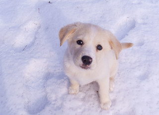 Ella the Snow Dog | by jpctalbot