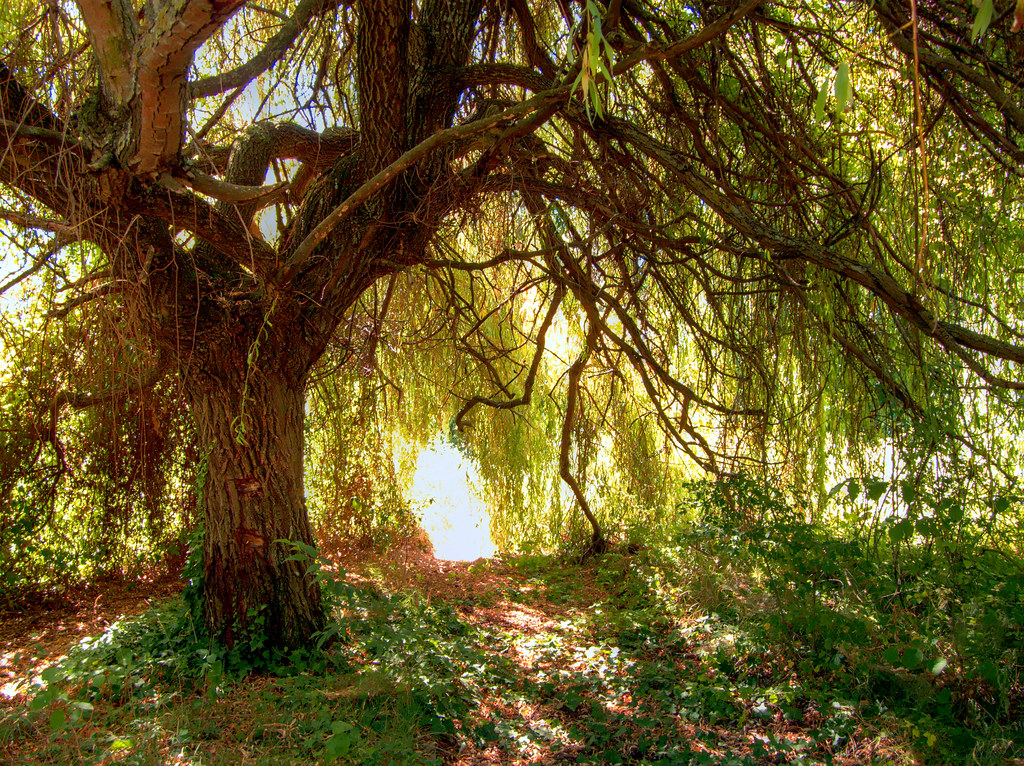 cool place under weeping willow | Flickr - Photo Sharing!