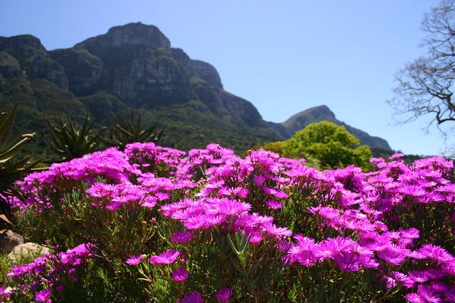 Kirstenbosch National Botanical Garden 8. Derek Keats