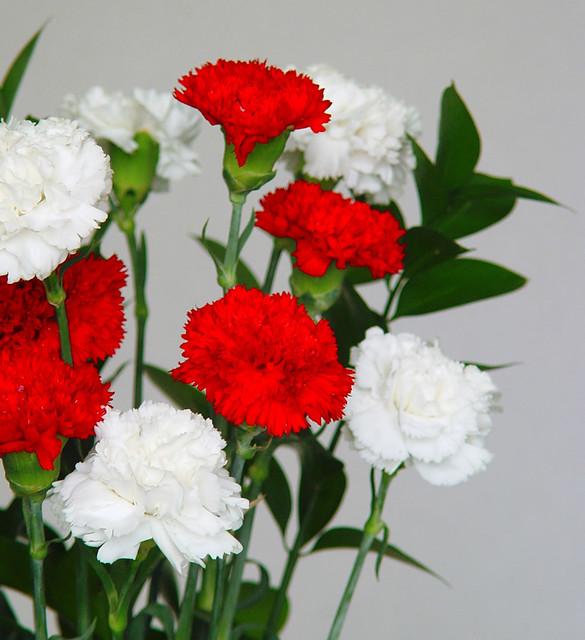 Claveles tipo est ndar dentro del clavel ornamental for Plantas ornamentales clavel