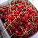 Red Currants from Comb's Herbs