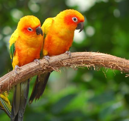 Love Birds couple Wallpaper : bird couple (how cute) birds in love dannyrocks12 Flickr