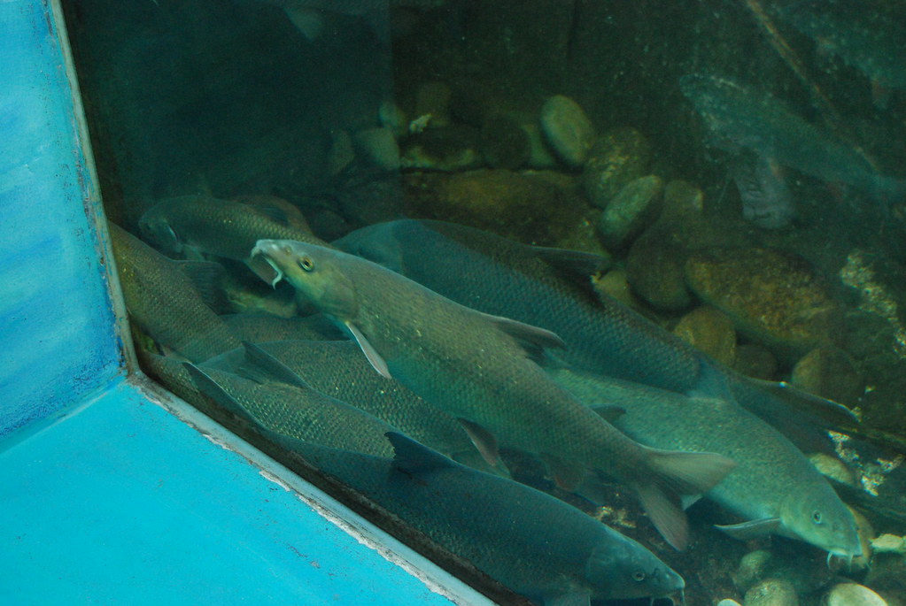 aquarium du val de loire aquarium du val de loire is europ flickr