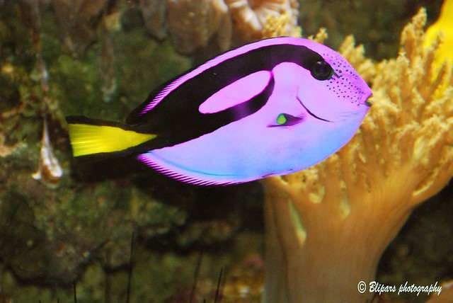 National aquarium washington dc bliven parages flickr for Aquarium washington dc