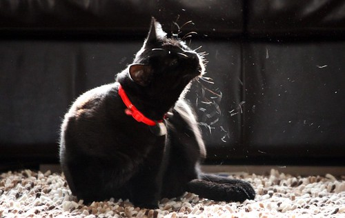 Black cat scratching | by @Doug88888