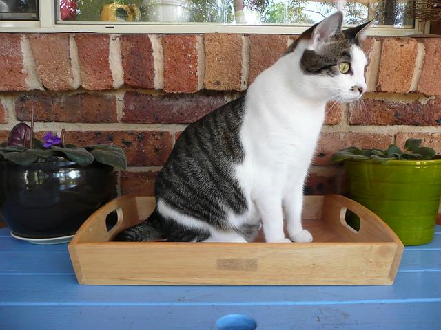Tray Tv Cat Litter Box