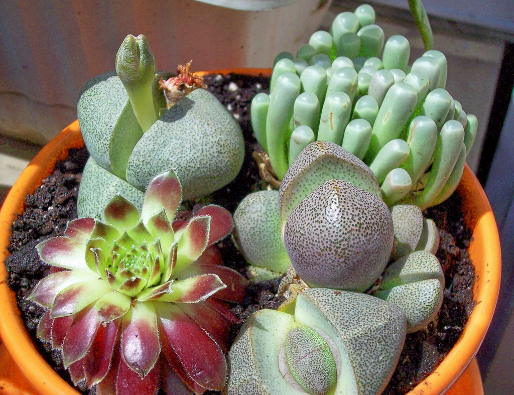 Quite Succulent Pictured Clockwise From Top Left